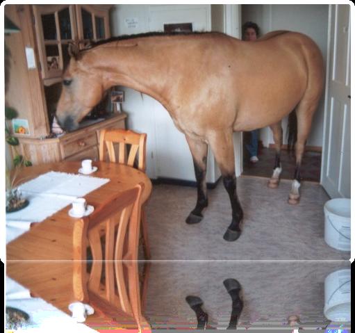 Firevision in der Küche