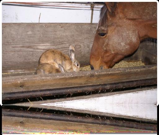 Barbi friesst mit Kaninchen